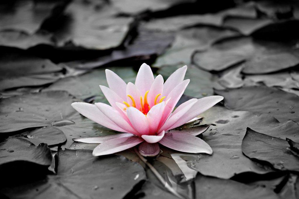 נהר של מי ורדים, בכתובים - Post Image